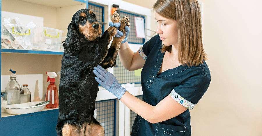 Mi okozhat hányást, hasmenést a kutyáknál?