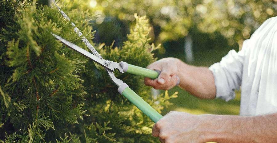 Mire figyeljünk kertészkedés közben?