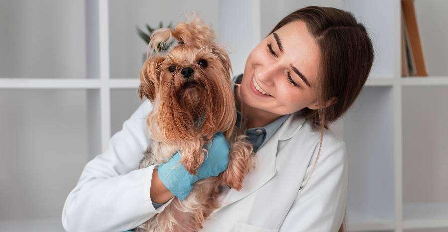 Melyek a leggyakoribb mozgásszervi elváltozások kutyáknál?