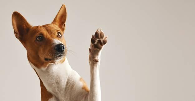 Mozgásszervi probléma állatoknál - Mikor forduljunk orvoshoz?