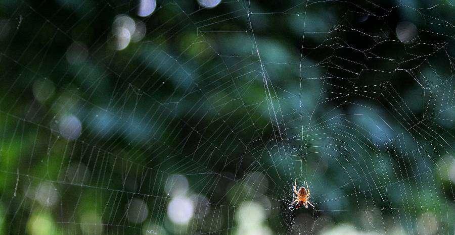 Mit tegyünk pókcsípés esetén?